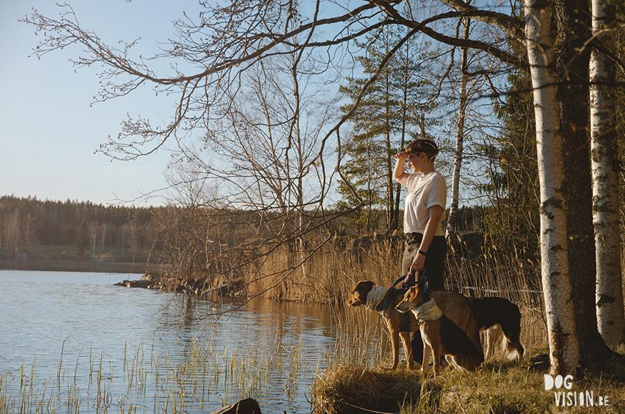 DOGvision hondenfotografie, coaching en copywriting, www.DOGvision.be, Zweden met honden