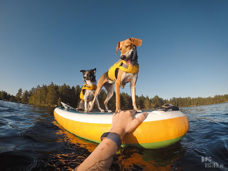 Hondenfotografie DOGvision. honden in Zweden, actiefotografie honden, GoPro fotografie, SUP met honden, www.DOGvision.be