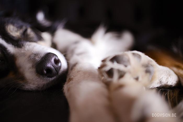 Mogwai | close up | www.DOGvision.be | dog photography