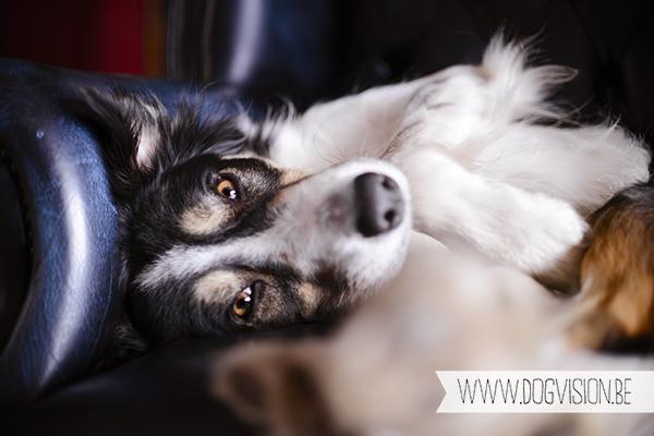 Sleepy Mogwai | www.DOGvision.be | dog photography