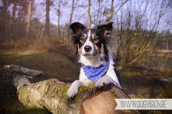 Mogwai | Border Colie | dog photography