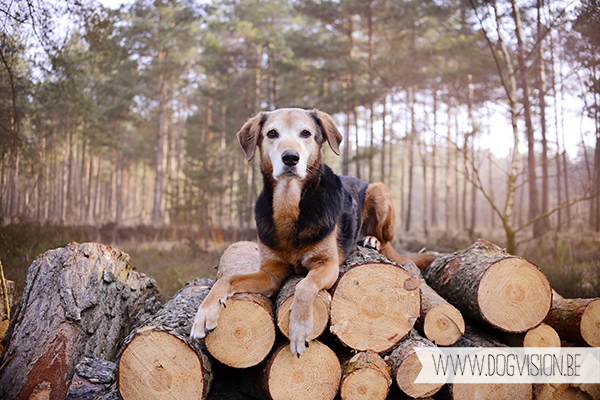 Ziggy | muttadventurer | dog photography