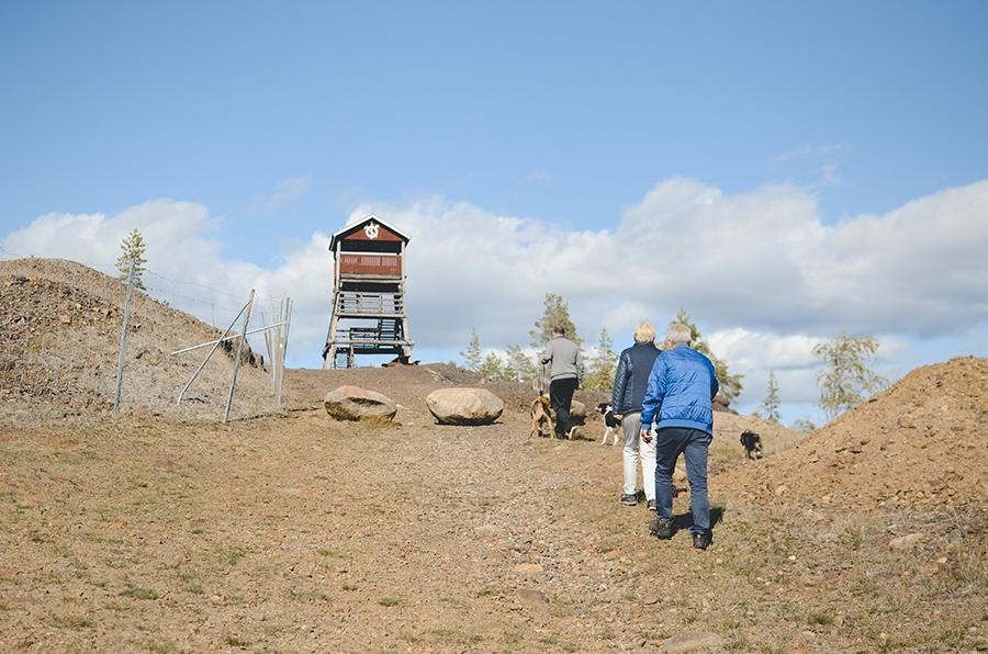 Vakantie in Zweden met hond, www.dogvision.be