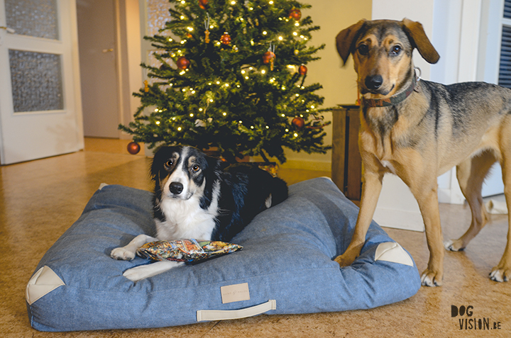 Kerst | www.DOGvision.be
