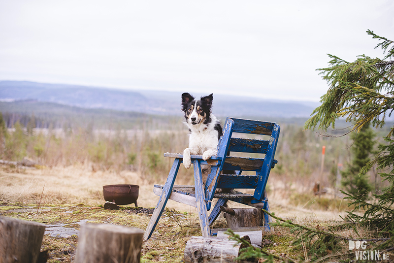 DOGvision dog photography in Dalarna Sweden, hiking with dogs, Nordic lifestyle, www.DOGvision.eu