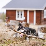 Hondenfotografie DOGvision, honden in Zweden, wandelen in Zweden met honden, Dalarna, www.DOGvision.be