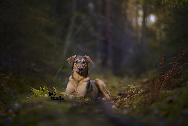 Moody dog photography shoot in the forest | hondenfotografie in het bos | off camera flash | blog on www.DOGvision.be