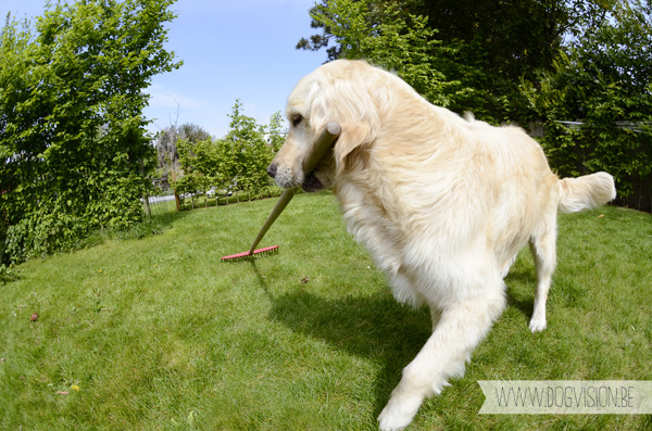 gardening | www.DOGvision.be