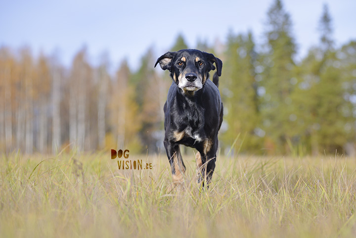 Zo fotografeer je een zwarte hond | www.DOGvision.be