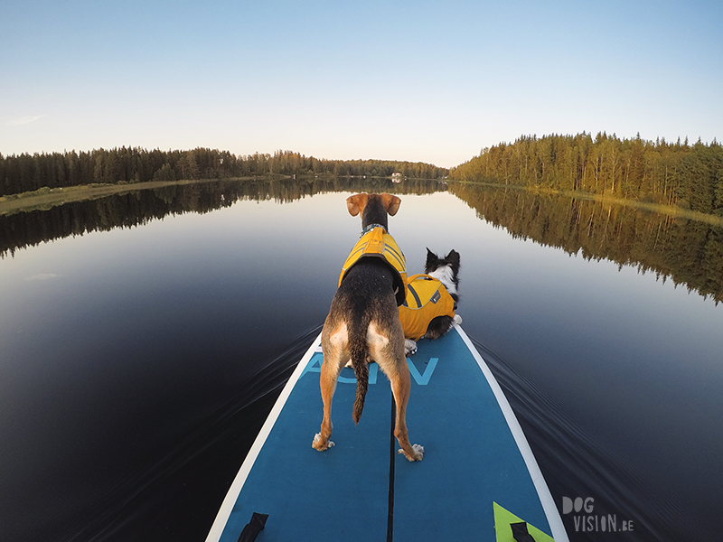 Paddling with dogs, SUP with dogs, outdoor adventures with dogs in Sweden, dog photography DOGvision, www.DOGvision.eu