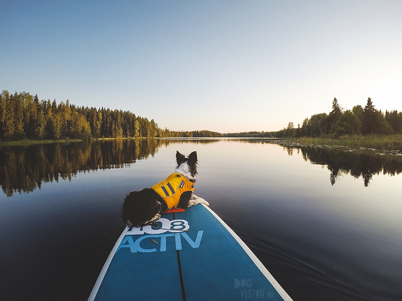 Sup with dogs, Sup met honden, paddleboard, standup paddle dogs, Border Collie, Life vest for dogs, Paddling in Sweden, www.DOGvision.eu