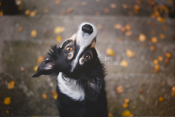 Being creative on one square meter | dog photograpy| blogpost on www.DOGvision.eu