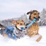 Hondenblog, Fenne Kustermans fotografie, honden in Zweden, actiefotografie, lifestyle hondenfotografie, www.DOGvision.be