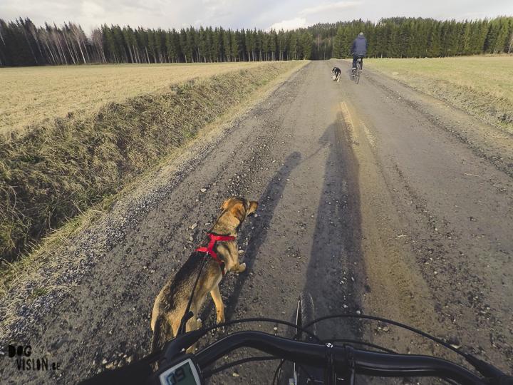 Fietsen met honden, Zweden, actieve honden, training, hondenfotografie, www.DOGvision.be