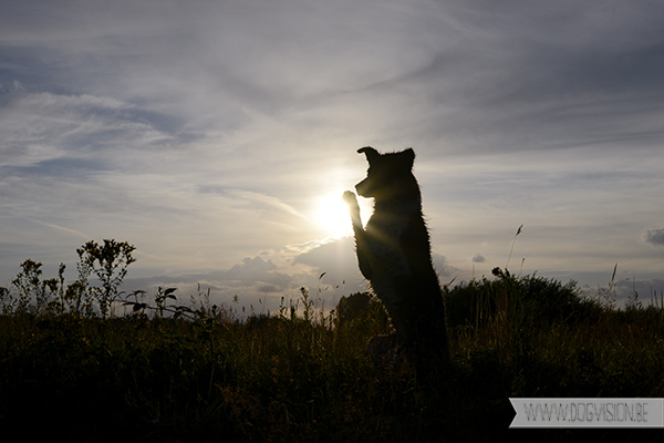 DIY | Silhouet fotograferen | hondenfotografie | www.DOGvision.be