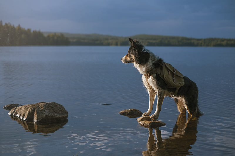 Dog scavenger hunt, mondo cane adventure dog challenge, summer puzzles, dogs in Sweden, dog photography, www.DOGvision.eu