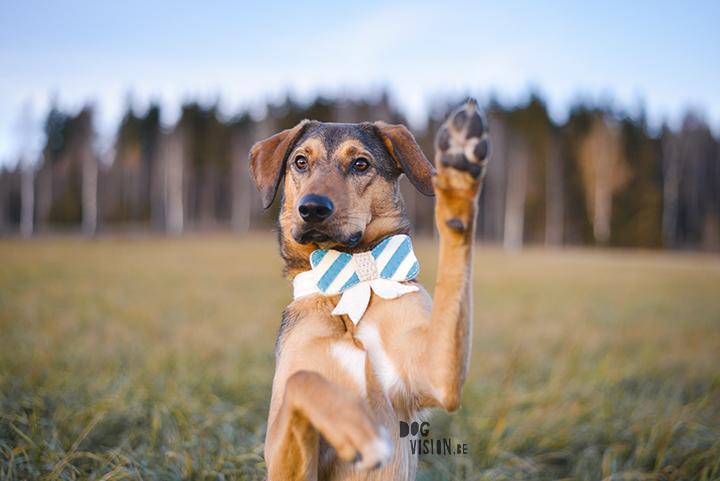 hondenfotografie zonlicht of shaduw? |www.DOGvision.be