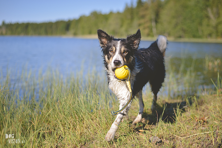 #TongueOutTuesday (23), professionele hondenfotografie, hondenfotografie, avontuur met honden, fotoproject, Dalarna Zweden, www.DOGvision.be