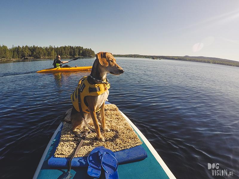 #TongueOutTuesday (23), Fenne Kustermans hondenfotografie, wandelen in Zweden met honden, SUP met honden, www.DOGvision.be