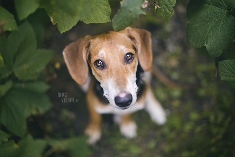portret adoptiehond Griekenland, hondenfotografie Zweden, hondenfotografie Europa, fotoproject honden, www.DOGvision.be