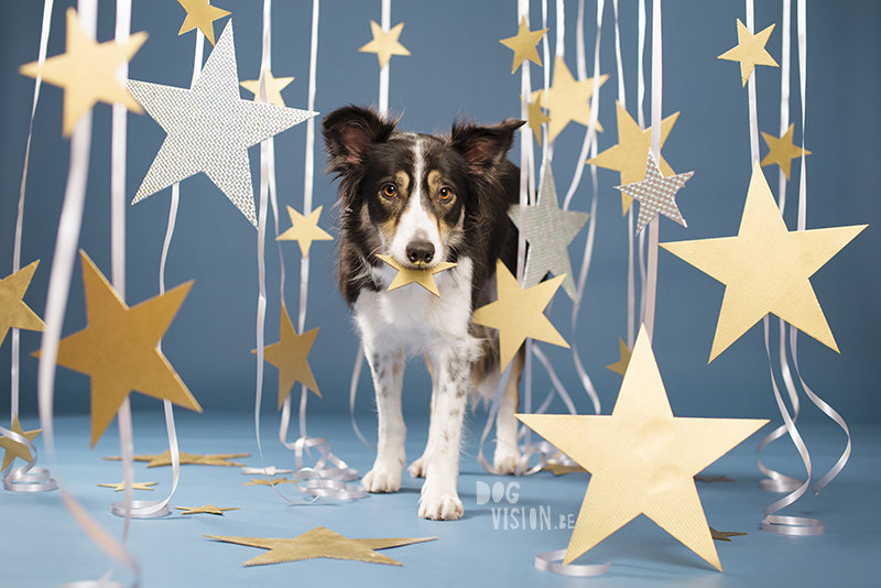 Hondenfotografie DOGvision, content creation, creatieve fotografie, studiofotografie, Fenne Kustermans, www.DOGvision.be