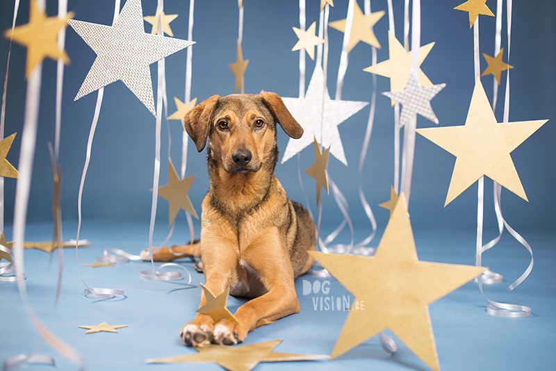 New Year dog, Dog photographer Sweden, European dog photographer, creative dog photography and content creation, studio pet photography, wwww.DOGvision.eu