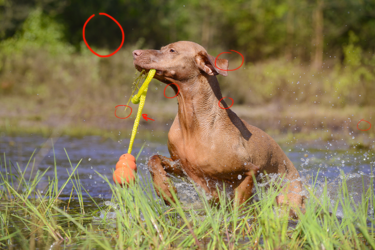 7 verschillen-oplossing | www.DOGvision.be | dog photography