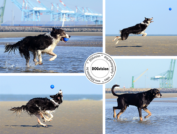 www.DOGvision.be | dog photography | Belgium | Hondenfotografie