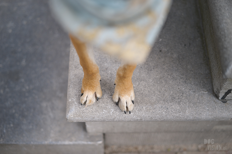 reizen met honden naar Amsterdam Nederland, Zaventem, Border Collie, hondenfotografie, www.dogvision.be