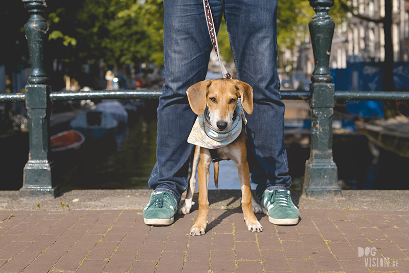 A day in Amsterdam city with the dogs, dog photographer Europe, traveling with dogs, road trip with dogs, www.DOGvision.eu
