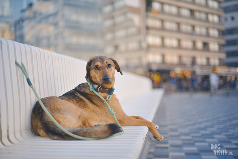 5 European shops for dog products that we love, www.DOGvision.eu