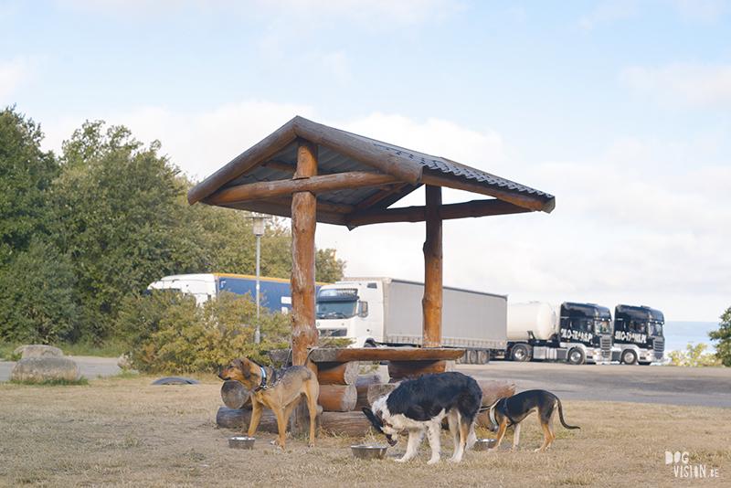 Reizen met honden België- Zweden, hondenfotografie, www.dogvision.be