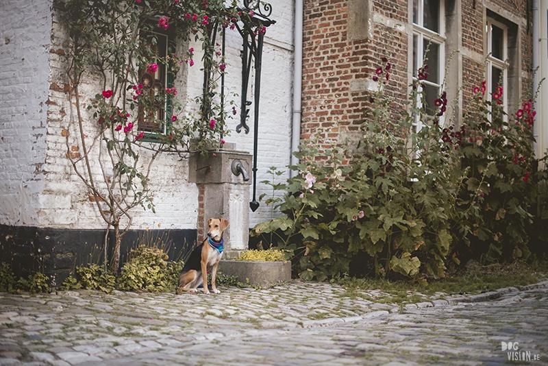 Hondenfotografie Antwerpen, hondenfotograaf Fenne Kustermans, Lier, www.DOGvision.be