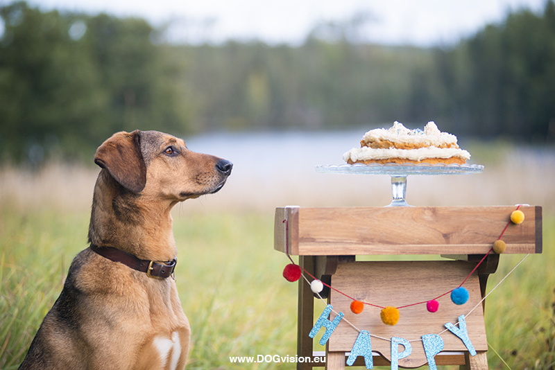 Birthday dog cake, home made food for dogs, creative dog photography, www.DOGvision.eu