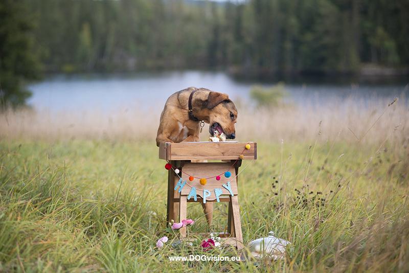 #TongueOutTuesday (39),hondenfotografie project, honden in Zweden, honden verjaardag, www.DOGvision.be