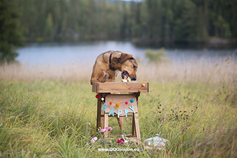 #TongueOutTuesday (39), Fenne Kustermans, dog photographer in Sweden, Dalarna dogs in Sweden, Rescue dog birthday with cake, dog photography project, www.DOGvision.eu