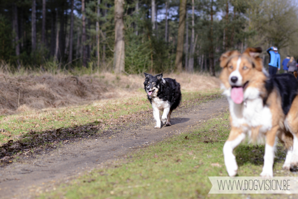 Birthday walk Ejay and Moon   www.DOGvision.be   dog photography