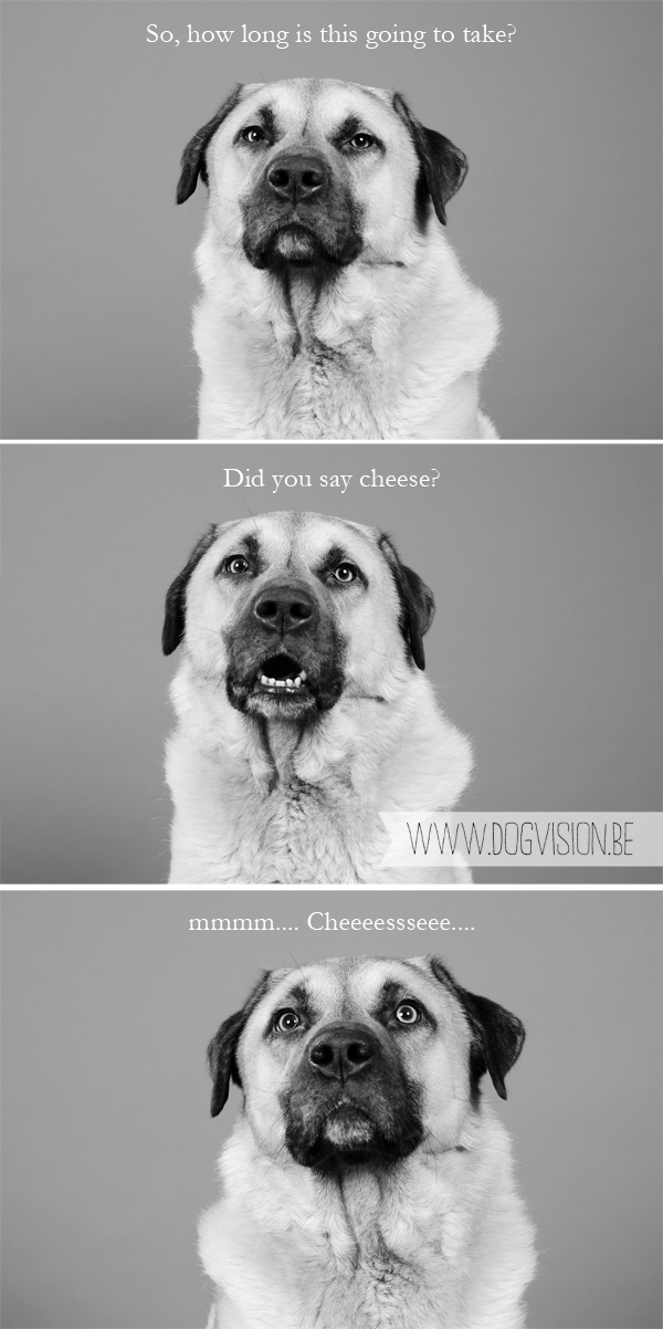 Cheese | www.DOGvision.be