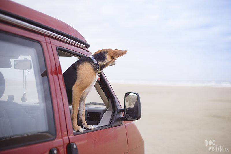 Traveling Europe with dogs, exploring Denmark, Skagen Løkken, AIRbnb Denmark, dog photographer, www.DOGvision.eu