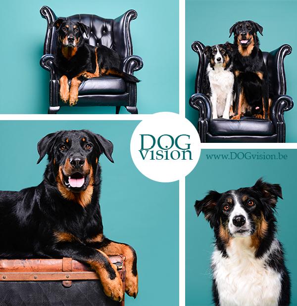 Dito, Joy & Izzy | www.DOGvision.be | hondenfotografie | Beauceron & Border Collie