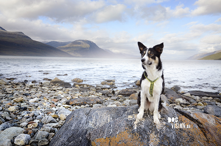 Norway + Border Collie | www.DOGvision.be