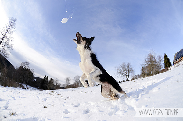 DOGvision | dog photography | Germany