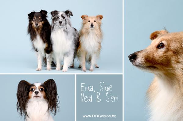 Erka, Skye, Neal & Sem | www.DOGvision.be