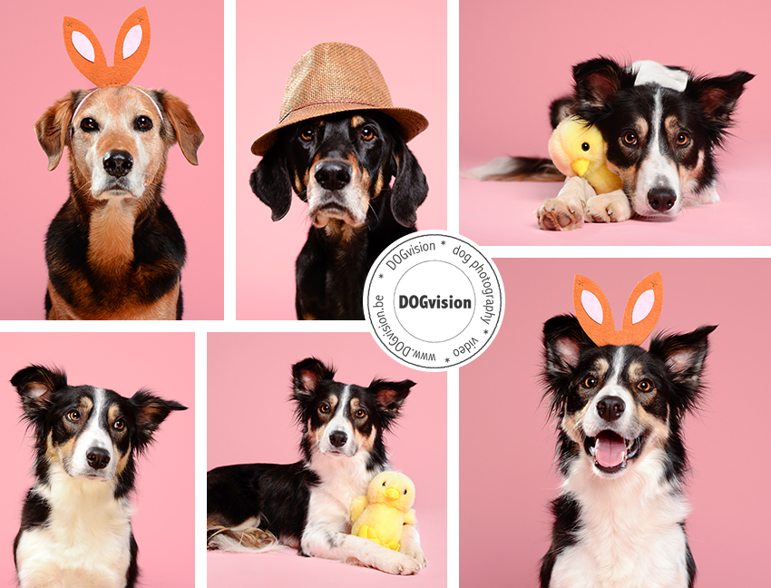 Easter 2015 | www.DOGvision.be | dog photography | hondenfotografie | Belgium
