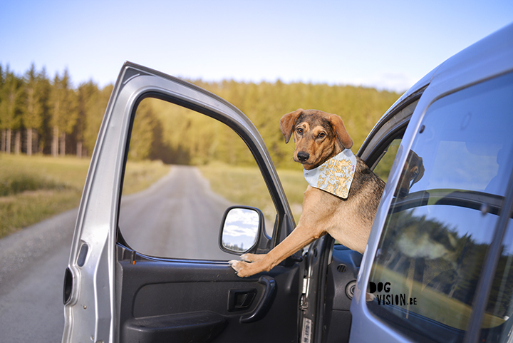 Road tripping with dogs | dog photography | www.DOGvision.be