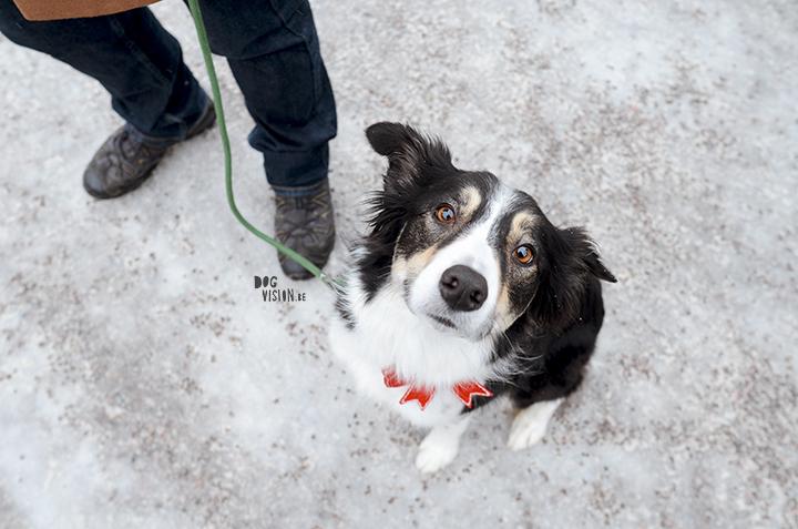 Falun, kerstmarkt, Zweden | #TongueOutTuesday (50)| fotoproject | Hond in de sneeus | hondenfotografie | www.DOGvision.be