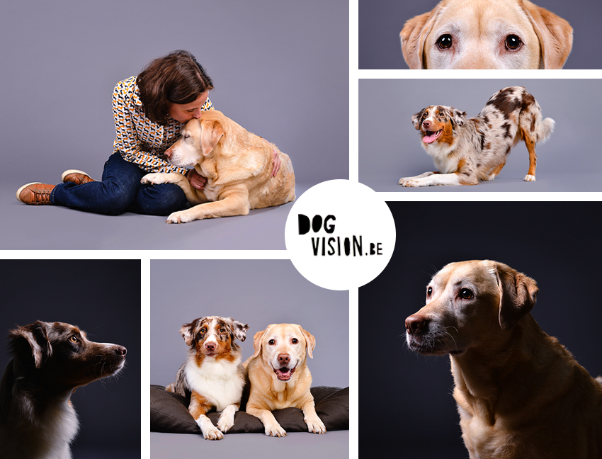 Fenne-Kenza-Collage | Labrador Retriever and Australian Shepherd | www.DOGvision.be | dog photography