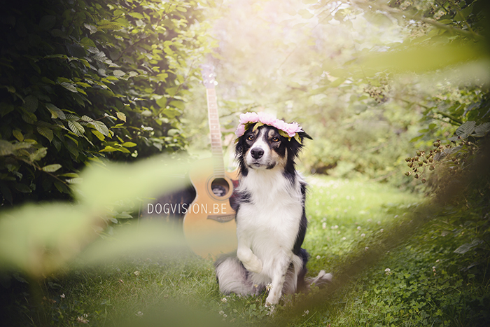 Flower power theme | Make cookies not war | www.DOGvision.be | dog photography | Border Collie Mogwai