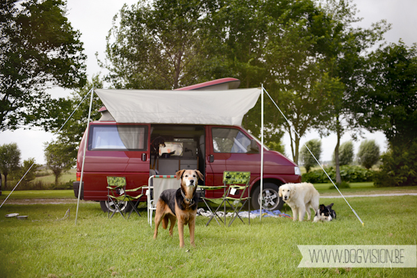 Vanlife | www.DOGvision.be | dog photography