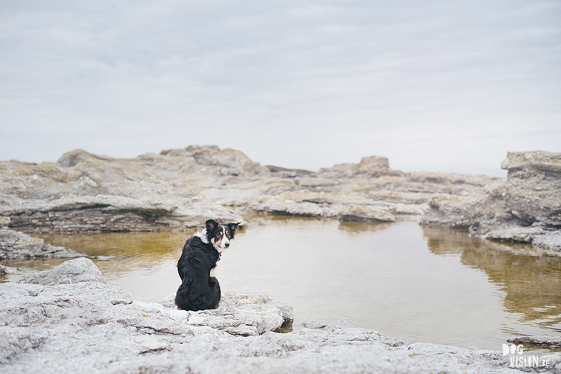 Exploring Gotland, Sweden, traveling with dogs, Europa dog travel, hiking with dogs, dog photographer nordics, www.DOGvision.eu